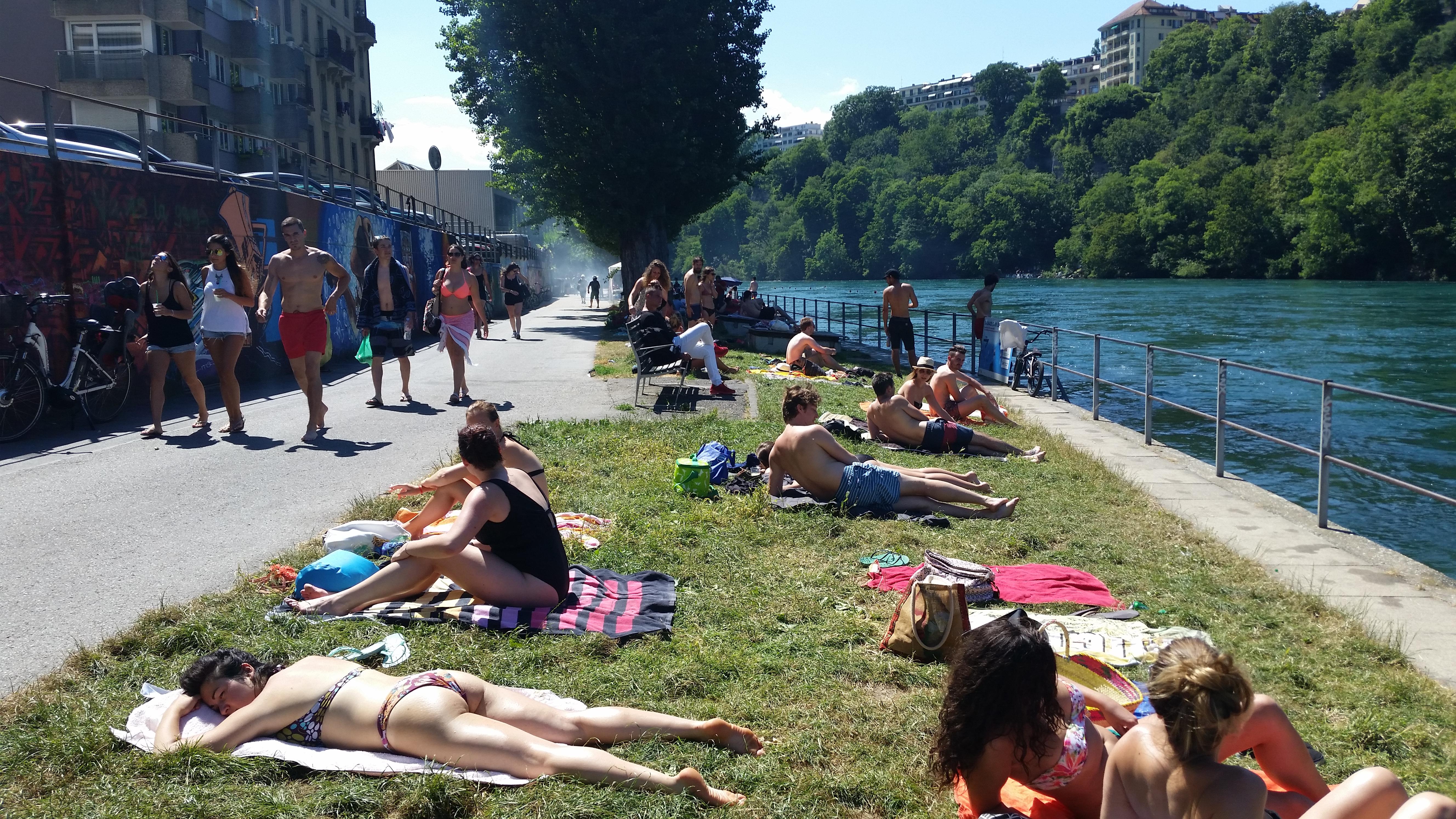 Le Sentier des Saules au bord du Rhône en été, Genève