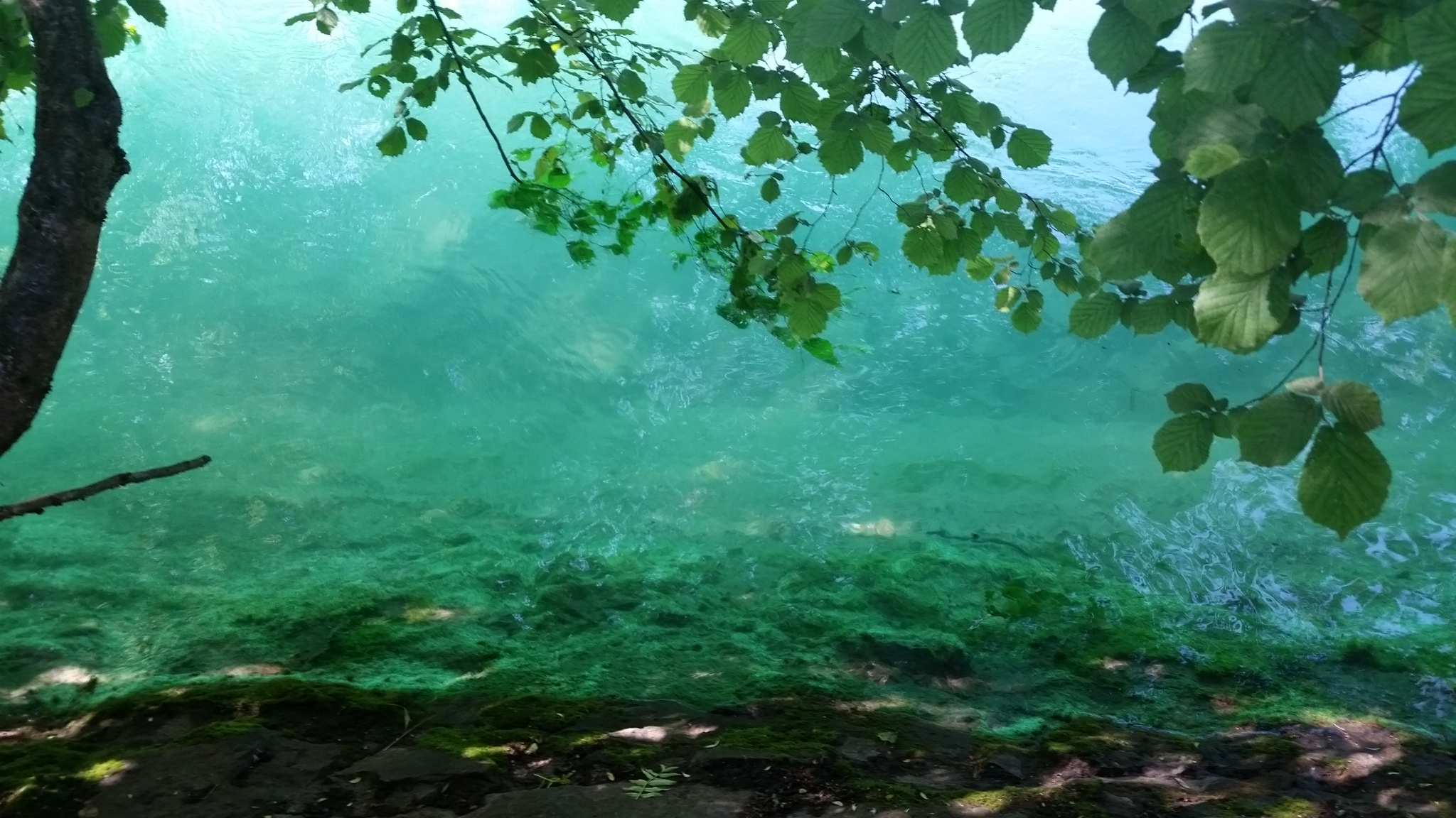 Photo du Rhône turquoise à la Pointe de la Jonction